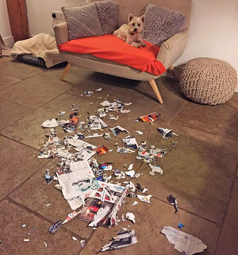 'And that,' said Tim's dog, 'is what I think of the  Bentley Bentayga's design'