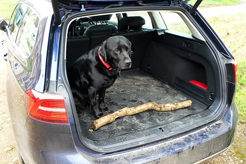 Anthony ffrench-Constant's dog and the CAR magazine VW Passat Estate
