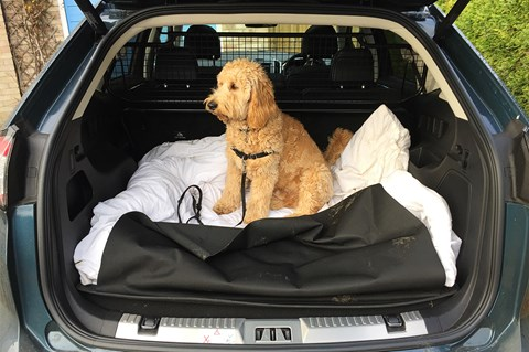 Ford Edge dog in the boot
