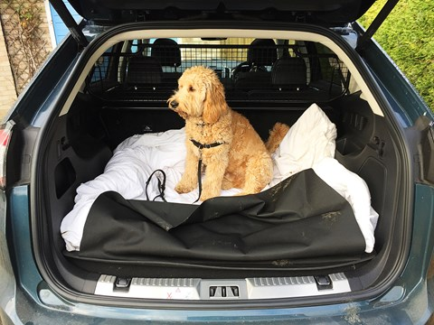 Pooch and Ford Edge: a good dog carrier