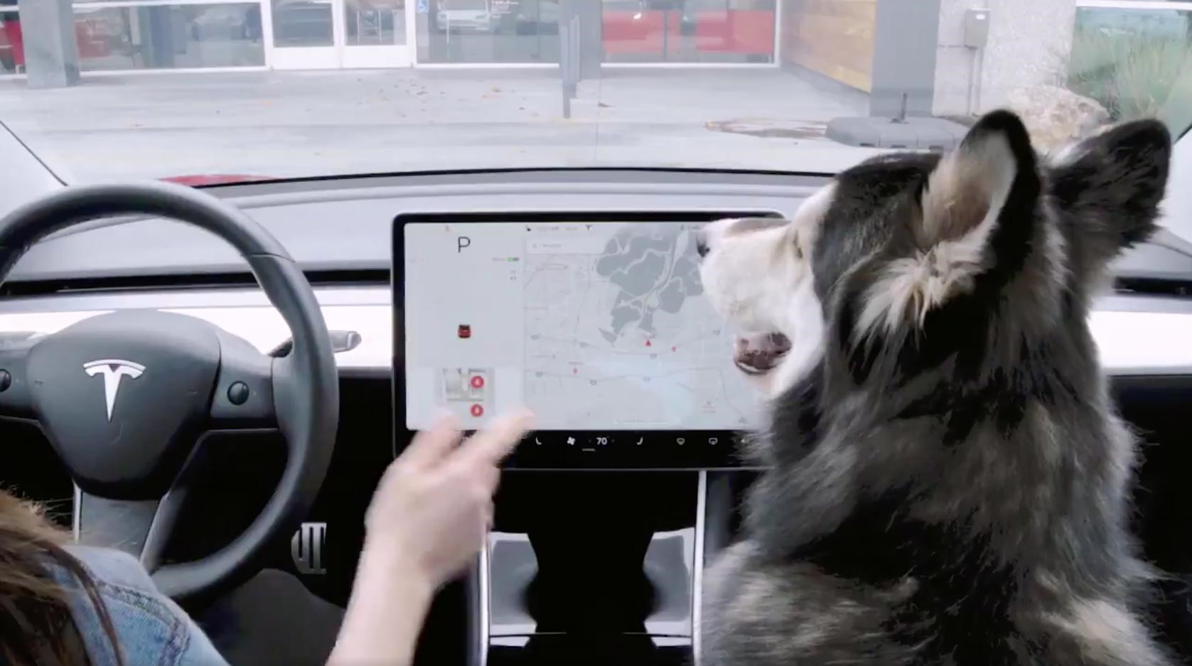 Tesla Dog Mode | CAR Magazine