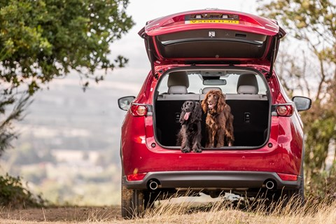 Keep your dog comfy in the car with our guide to the best cars for pets