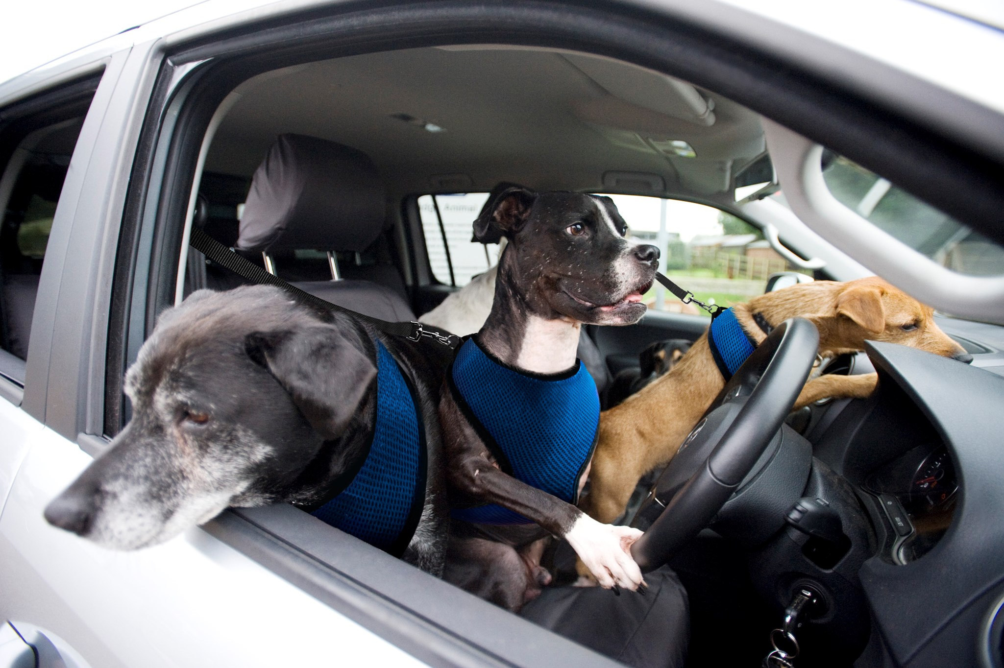 Best cars for dog owners 2019 UK: our pick of new cars for carrying pets